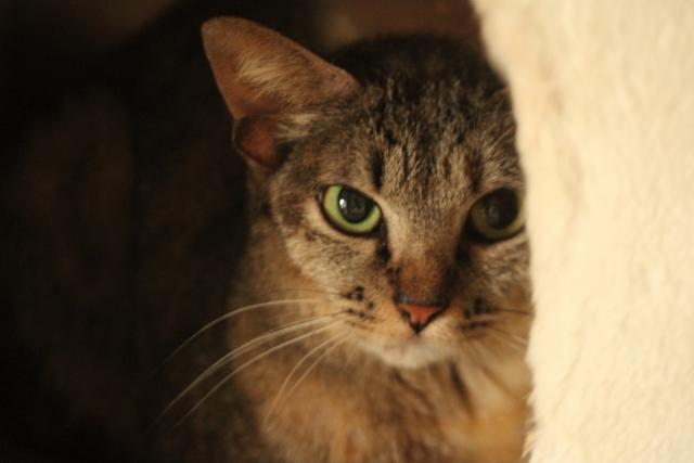 http://islandcats.yanbarukuina.jp/news/%E5%B3%B6%E3%81%AD%E3%81%93_04.jpg