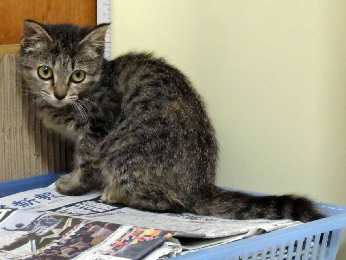 http://islandcats.yanbarukuina.jp/news/0ae0b38eff9898043c899b9845ba752dc90bc49f.jpg