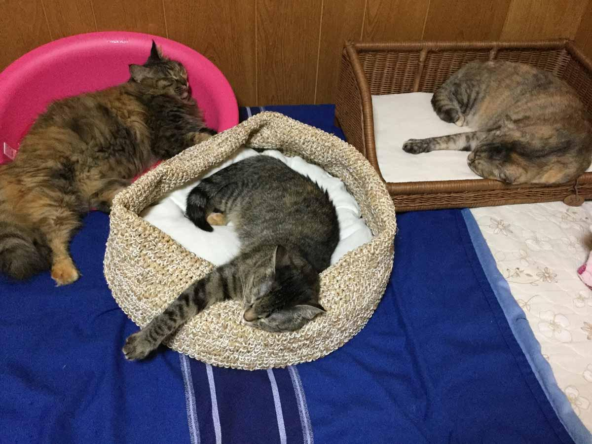http://islandcats.yanbarukuina.jp/news/995-2.jpg