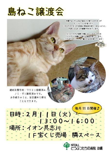 島ねこ譲渡会ポスター5.png