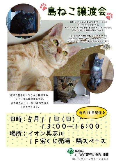 譲渡会ポスター7.jpg